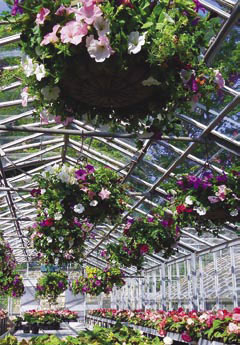 Hanging Baskets in the Nursery