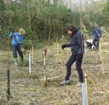 Tree Planting in Archery Field
