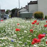 Keynsham Poppies